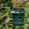 In inverno, offriamo cibo agli uccellini