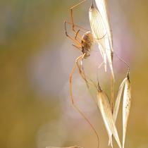 Miti e leggende sui ragni