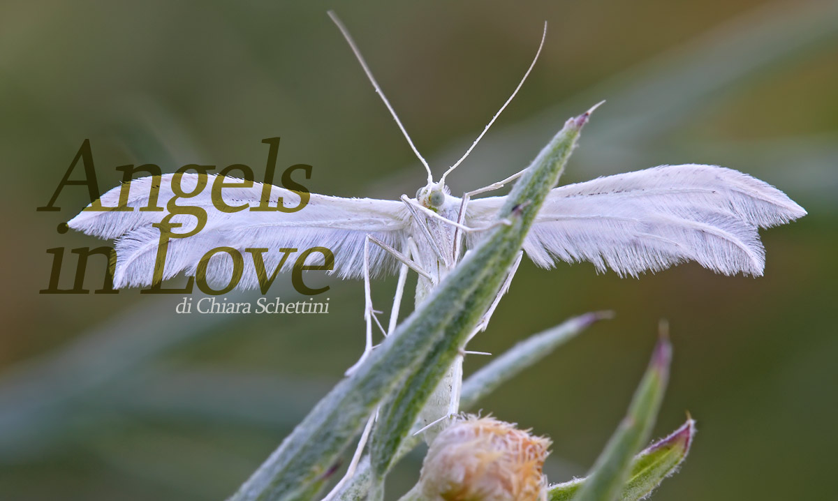 Angels-in-love-copertina