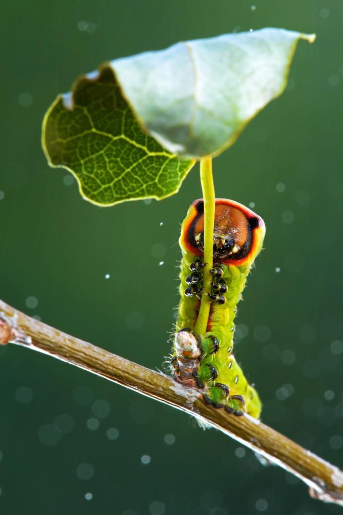 La Natura sa manifestare la propria infinita creatività in modo talvolta eclatante...