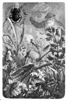 Romantici naturalisti
